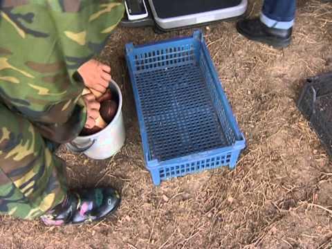 Закуп грибо в в Ярковском районе Тюменской области