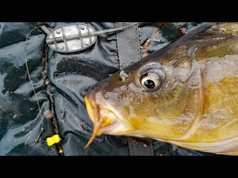 How To Catch Carp In Summer. Carp Fishing Bait, Carp Rigs, Tips And Techniques