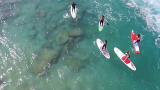 видео Акулы Cредиземного моря
