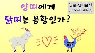 양띠에게 닭띠는 최고의 봉황인가? 양띠-닭띠 궁합-행복출발