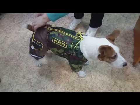 одежда для собак своими руками форум