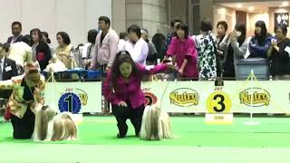 FCI JAPAN INTERNATIONAL DOG SHOW 2018 Elmo is BOB Thank you very mu...