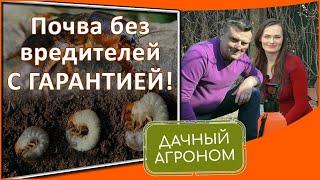 Избавиться от медведки и личинки майского жука с гарантией! Метод Дачного агронома