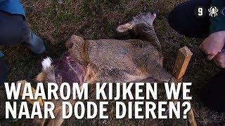 Waarom kijken we via webcams naar dode dieren? | De Buitendienst over Cameravallen