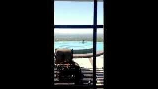 Bear Swimming in Monrovia Backyard Pool! thumbnail