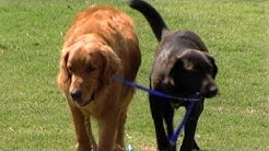 Abandoned Puppy Becomes Seeing-Eye Dog for Another