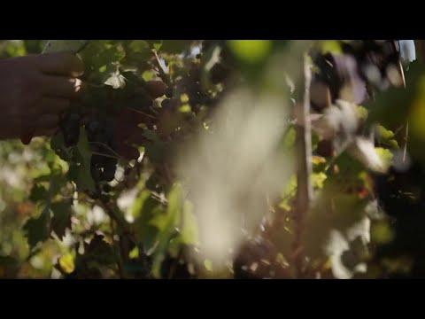 Strada del vino e del sapore: ecco le bellezze del...