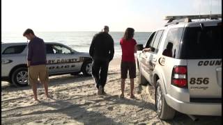 dead dolphin washes up on myrtle beach shore