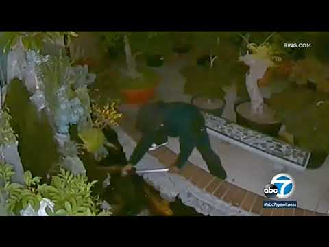 Wake Up Call - Man Caught on Video Stealing Koi Fish from Westminster Home
