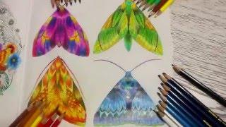 Раскраска-Антистресс |Бабочки| В Царстве Животных | Барвистий Світ  | Animal Kingdom