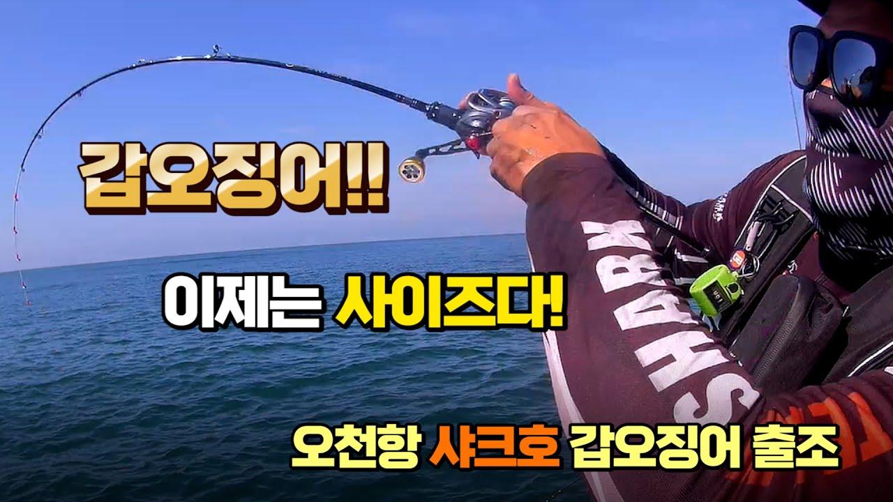 찰박이(갑오징어)시즌  시작이다~XX갑??