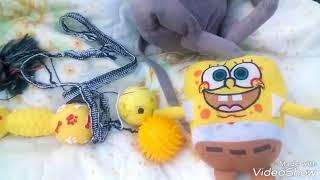 Які можуть бути іграшки у йоркширського тер'єра || Jessica York, іграшки для собак!