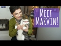 We have a new cat! ||  Meet Marvin