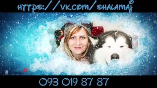 Снежные псы