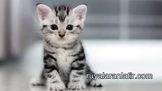 Rüyada Evde Kedi Görmek & Rüyada Yavru Kedi Görmek & Rüyada Ölü Kedi Görmek & Rüyada Kedi Sevmek