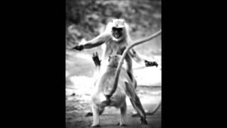 Alrune - Monkey Combat