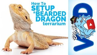 How To Setup a Bearded Dragon Terrarium | Big Al's