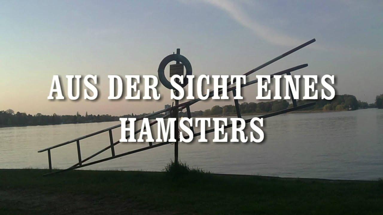 lustige, witzige, coole Sprüche & Videos: Hamster ...