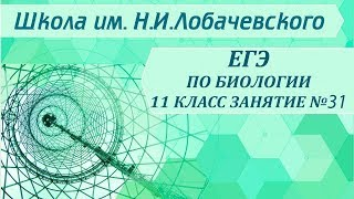 ЕГЭ по биологии 11 класс. Занятие 31. Кровеносная система человека