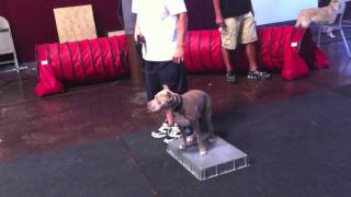 Dog Training - Learning Placeboards For Better Self Control