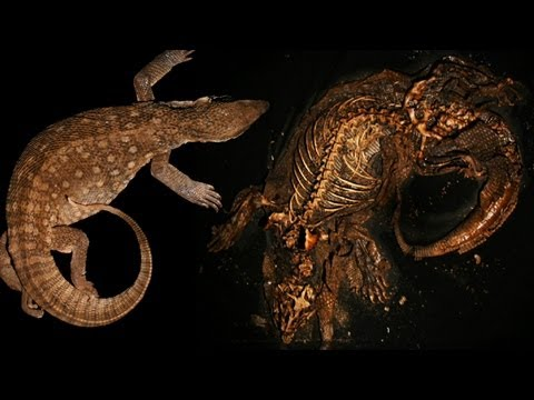 Watch A Monitor Lizard Decompose In This Freaky Timelapse