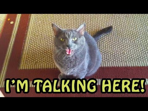 Cats Talking With Their Humans Compilation 2018 [NEW]
