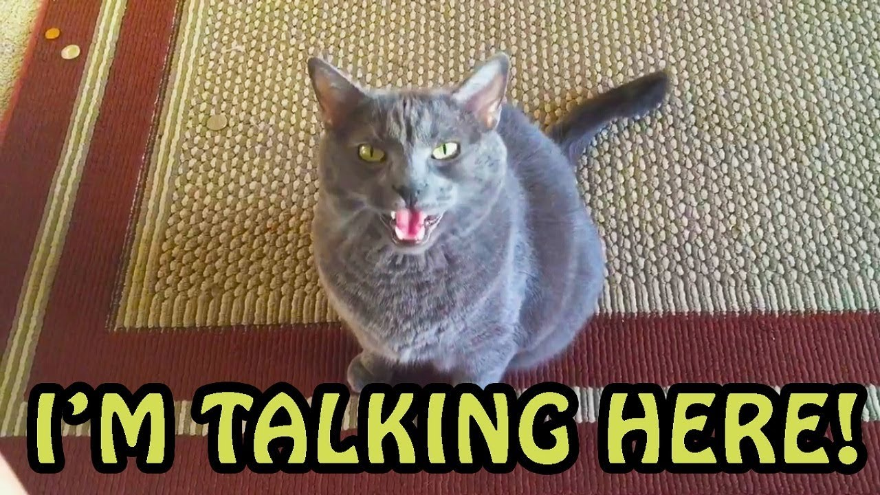 Cats Talking With Their Humans 2018 [NEW] - YouTube