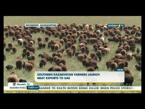 Южный Казахстан начал экспортировать мясо в Арабские Эмираты - KazakhTV