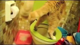 Кот срет в унитаз ха