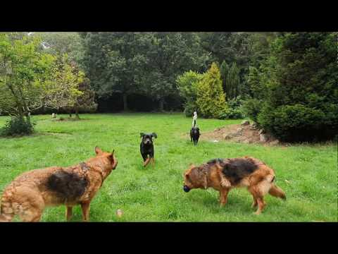 Rottweiler training video | FunnyDog TV