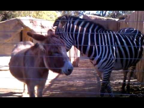 breeding animals in zoos is really Breeding animals in zoos: is really good for animals by: pham hoang final draff 28th september, 2012 breeding animals in zoos: is really good for animals.