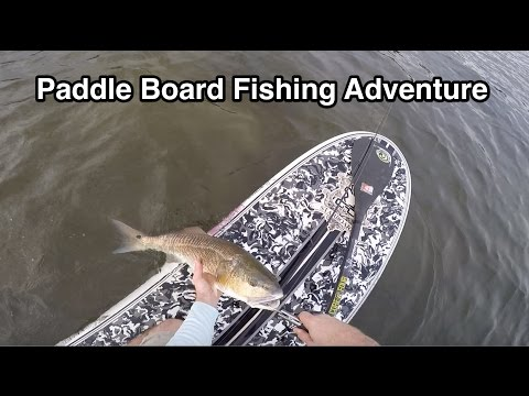Fishing Report for St. Petersburg FL [Kayak and Paddle Board Spot]