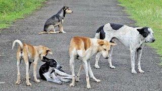 Lovely Street Dogs , Bairagarh , Bhopal , Madhya Pradesh .
