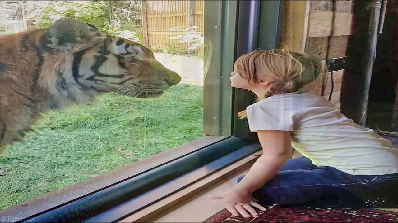 The New Safari Lodge In Kent Where Cats Prowl Outside Your Window