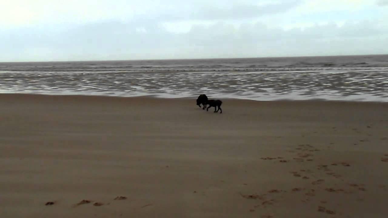 2014 Paul U Curt In Calais Am Strand Youtube
