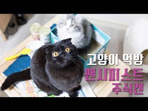 고양이 먹방 : 팬시피스트 주식캔