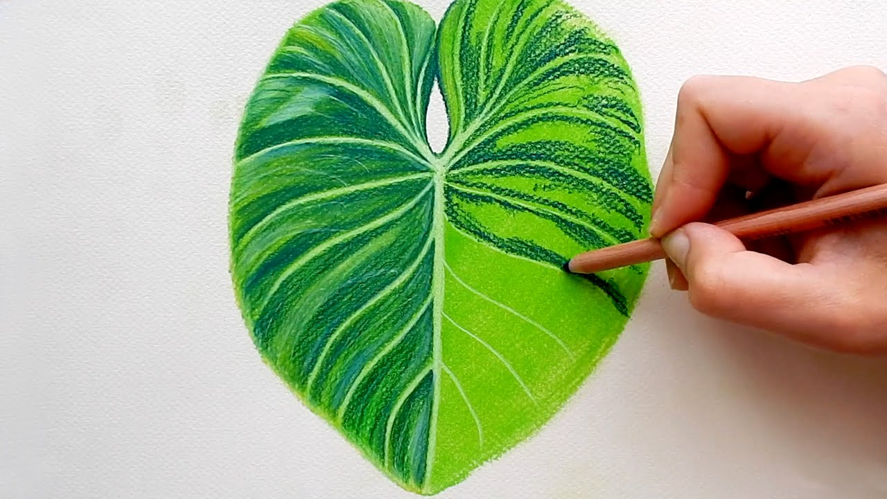 Drawing A Tropical Leaf With Faber Castell Soft Pastels Emmy Kalia Youtube Watercolor drawing palm leaves exotic tropical plants. drawing a tropical leaf with faber castell soft pastels emmy kalia