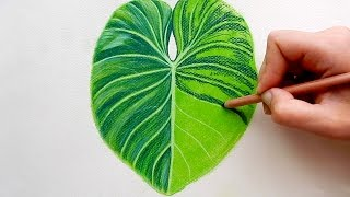 Timelapse | Drawing a Tropical Leaf with Faber-Castell soft Pastels | Emmy Kalia