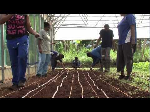"Teaser ""Mayotte, quand l'agriculture sort de terre"""