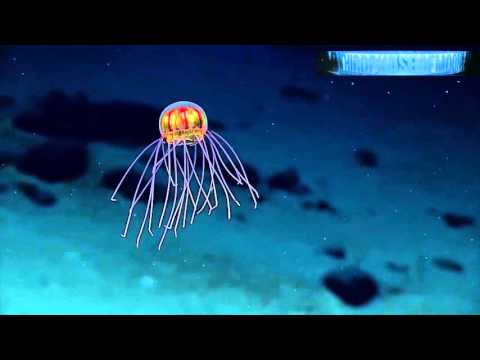 UFO Sightings Ocean Exploration Discovers UFO Like Jelly Fish! 2016 Watch THIS~