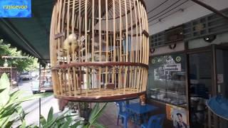 Back Street Bangkok Exotic Song Bird Cages Unseen Thailand
