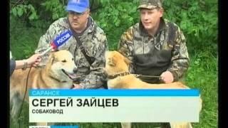 Выставка собак охотничьих пород