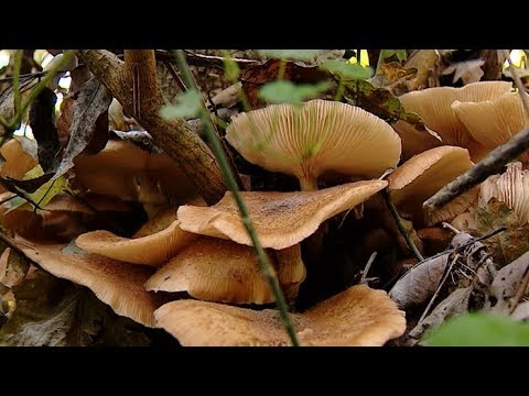 Тихая охота на людей: какие грибы нельзя собирать на Кубани