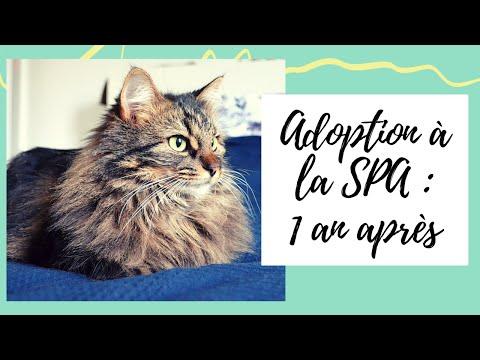 Adoption De Mon Chat à La SPA : Un An Après ! 🐱