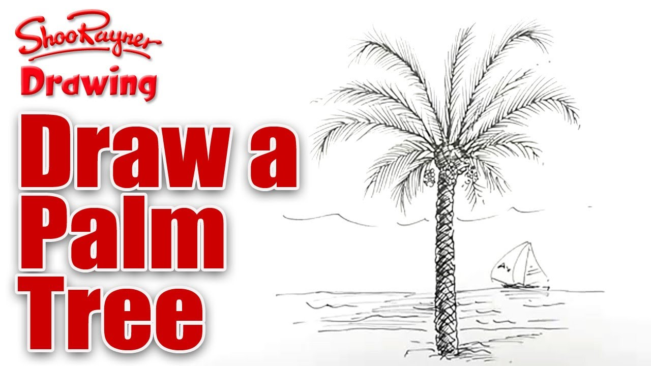How to draw a palm tree spoken tutorial youtube pooptronica