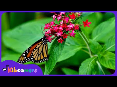 Soothing Relaxation - YouTube
