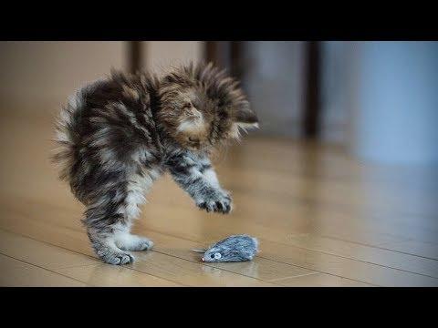 Funny Kittens 🐱😺 Funny Playful Kittens (Full) [Funny Pets]