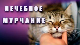 ♫ Лечебное кошачье мурлыкание. Релаксация ♫