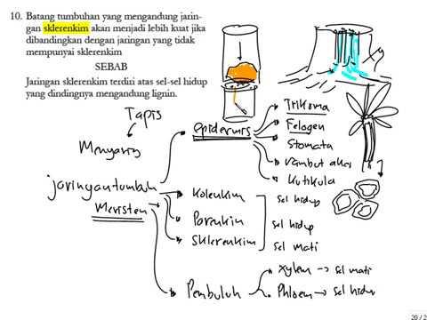Tipe jaringan pada tumbuhan youtube tipe jaringan pada tumbuhan ccuart Images