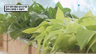 공기 정화식물은 실내 공기를 얼마나 정화할 수 있을까?…